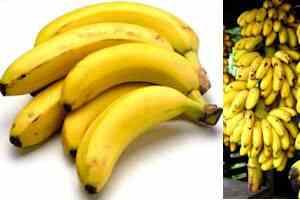 cambur banana platano panquecas